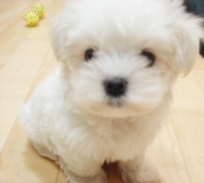 changmindog-legra-1.jpg